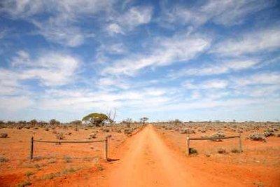 Medizin aus dem australischen Outback - Teebaumöl