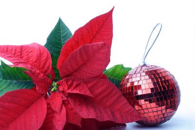 Dekorieren Sie zur Weihnachtszeit Ihre Blumen.