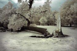 Ein abgebrochener Baum bedeutet Aufwand für den Grundstücksbesitzer.