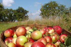 Auch in Äpfeln findet sich Säure.