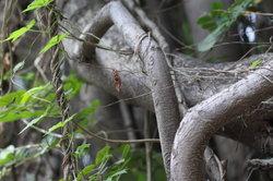 Haben Sie schon von nachhaltiger Forstwirtschaft gehört?