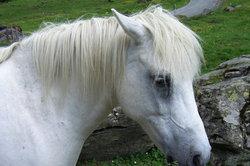 Pferde sind teuer.