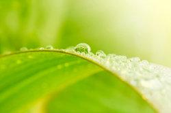 An selbst gezüchteten Pflanzen hat man gleich noch mehr Freude.