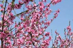 Obstbäume sollten von Schädlingen freigehalten werden.