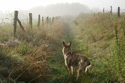 Mit GPS entlaufenden Hund wiederfinden.