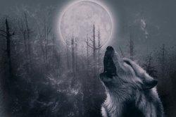 Zum Fasching oder Halloween als böser Wolf schminken