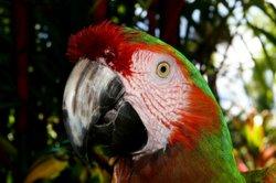 Ein Papagei hat viele bunte Federn.