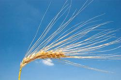 Mit dem Getreideanbau die Nahrung in Minecraft sichern