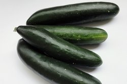 Schmorgurken wirken etwas robuster als Salatgurken.