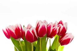 Die Blumen werden dem Empfänger am gewünschten Tag zugestellt.
