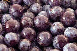 Reife, frosterfahrene Schlehenfrüchte verwenden