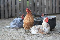 Sie können ein Hühnerhaus selbst nach Bauanleitung bauen.