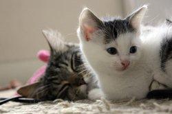 Die Suche nach den richtigen Namen für ein Katzenpärchen ist nicht schwer.