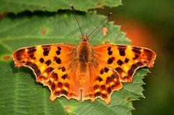 Aus einem Blatt Papier eine Schmetterlingskarte zaubern.