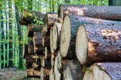 Sie können nahezu alle Holzarten im Internet kaufen.
