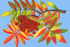 Die Eberesche besticht durch schönes Herbstlaub.
