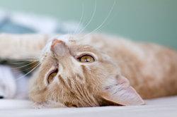 Katzenhaare sind in der ganzen Wohnung zu finden.