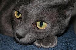 Die ängstliche Katze beobachtet gerne.
