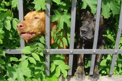 Hundegebell am Zaun ist oft lästig.