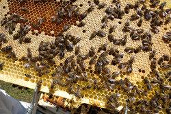 Honig aus der Region ist etwas Besonderes.
