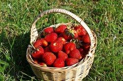 Erdbeeren können das Virus ausbrechen lassen.