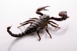 Skorpion-Männer brauchen außergewöhnliche Geschenke.