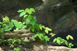 Exotische Rankpflanzen wirken besonders dekorativ.