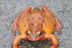 Denken Sie an die Froschklappe im Drainagerohr.