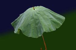 Ein Regenschirm von Knirps bietet Schutz bei Regen und Wind.