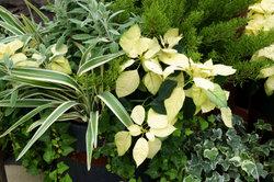 Zimmerpflanzen benötigen artgerechte Pflege.