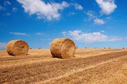 Marktpreise für Ackerland liegen mitunter weit über den Bodenrichtwerten.