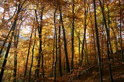 Zu den Bundesimmobilien im Verkaufsangebot gehören auch Waldflächen.