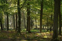 Ein Waldgrundstück muss auf eigene Kosten gepflegt werden.