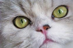 Werden Sie eine Warrior-Cat.