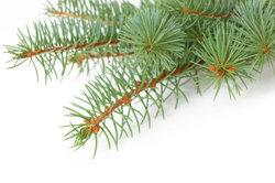 Nadelgehölz bleibt auch im Winter grün.