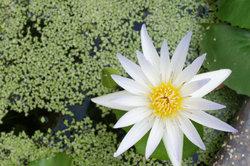 Ein Teich dient nicht nur Ihnen zur Freude.