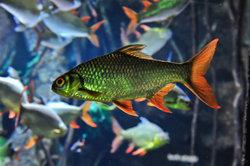 Fische haben unterschiedliche Futtervorlieben.