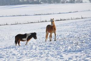 Kaltes Wetter ist eine Gefahr für die Pferdenieren
