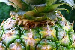 Die Ananas verfügt über ein Enzym, das verdauungsfördernd wirkt.