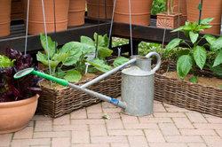 Überlassen Sie das regelmäßige Gießen dem Bewässerungssystem.