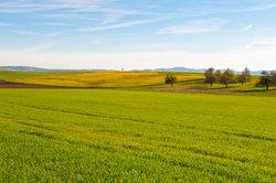 Je ertragreicher das Ackerland, desto höher die Pachtzinsen
