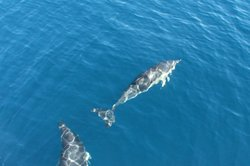 Delfine in freier Wildbahn zu sehen, ist ein Erlebnis der besonderen Art.