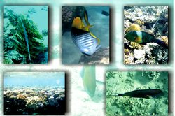 Schnorchler tauchen in eine wunderbare Unterwasserwelt bei Tarajalejo ein.