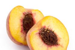 Den Pfirsich Benedicte können Sie im August ernten.