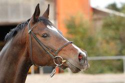 Ein Pferdetransport ist Stress für das Tier.