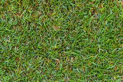 Sauberer Rasen mit scharfem Schneidewerkzeug.