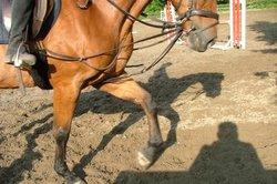 Gesunde Pferde sind zur Leistung bereit.