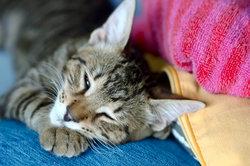 Katzen bei Urlaub des Besitzers betreuen als Geschäftsmodell