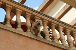 Auch in teuren Hotelanlagen gibt es Streunerhunde.
