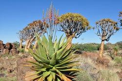 Namibia ist ein beliebtes Fernreiseziel.